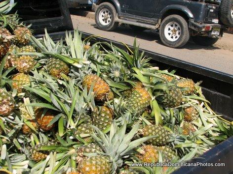 Fresh Pineapples For Sale, Dajabon, Dominican Republic